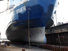 RODANTHI - The bow